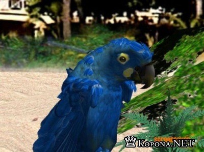 Parrot 3D Screensaver 1.0 + Crack