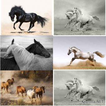 Растровый клипарт - Лошади (JPG)